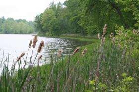 The wetland reserve program is no longer authorized due to the lack of a farmbill.