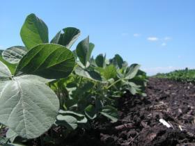 The Illinois Corn Grower's Association and the Illinois Farm Bureau both oppose the House's move.