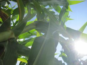 Data from 2012 shows crop insurance had a significant impact on farmers' incomes.