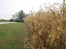 "Corn yields are ""better than expected"" this year."