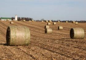 Bales of corn stover, which can be used to create cellulosic ethanol, sit in a field.