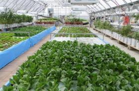 At All Seasons Harvest near Cedar Falls, Iowa, lettuce, kale and herbs are grown in nutrient-rich water fertilized by tanks of farmed tilapia fish.