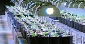 Medical marijuana cultivation facility