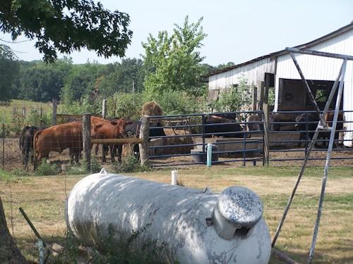 Steve Newberry's farm in rural Lee County.