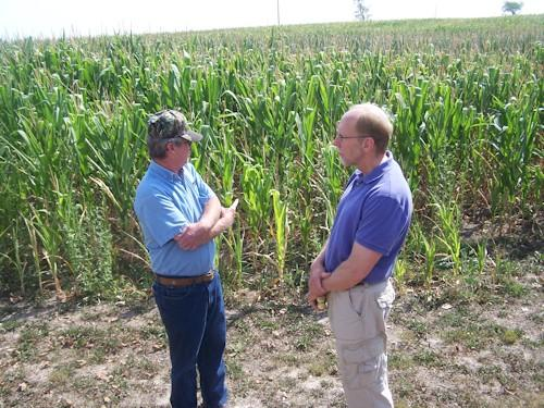 Rep. Loebsack (right) and farm owner Steve Newberry look out over Newberry's damaged corn crop.