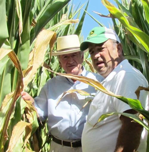U.S. Senator Tom Harkin, D-Iowa, (L) and Montrose farmer Lee Auwater get a close-up look at a dry corn field.