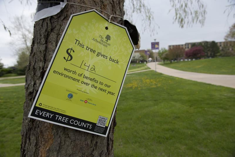 Tags like these will be on trees around campus to show their financial impact