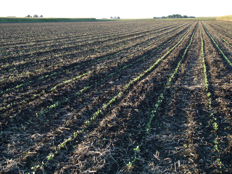Cover crops sprout at the Allison Farm, Western Illinois University's organic research farm, outside of Macomb, Illinois. One of the USDA's goals is to improve soil resilience and increase productivity by getting more farmers to plant cover crops.