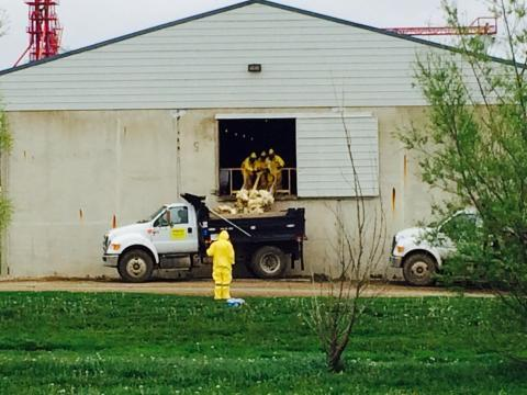 Workers in Tyvec protective suits shovel dead chickens out of Sunrise Farms, an enormous egg-laying facility near Harris, Iowa, in May. Part of the bio-security measures at all of the infected farms require workers to wear the suits, which have respirator