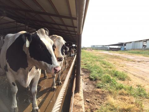 Idaho's dairy industry wrote and lobbied for that state's ag gag law.
