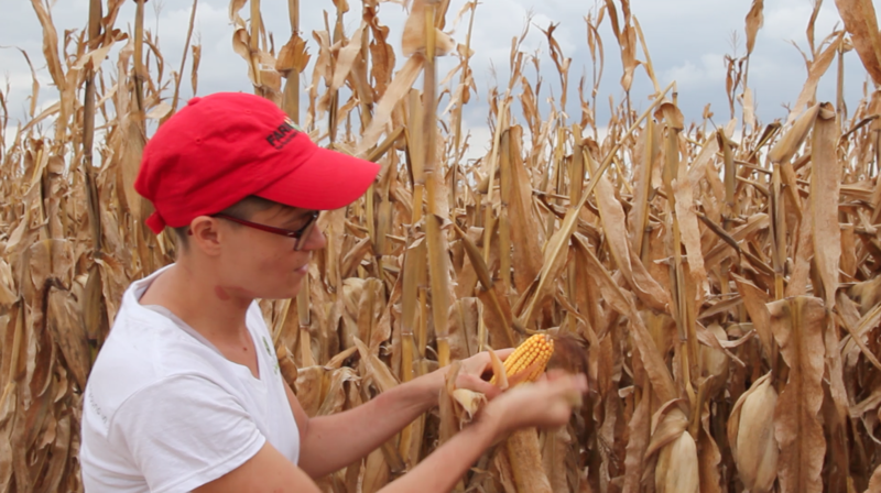"Harvest Public Media's Abby Wendle competed in the Illinois State Corn Husking Contest earlier this year for the first time. She plans to wear a long-sleeved turtle neck next year to avoid ""corn rash,"" a common ailment among huskers."