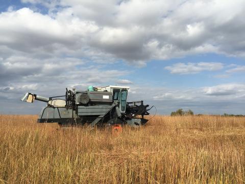 A combine rolls through a Nebraska prairie to collect grass seed.