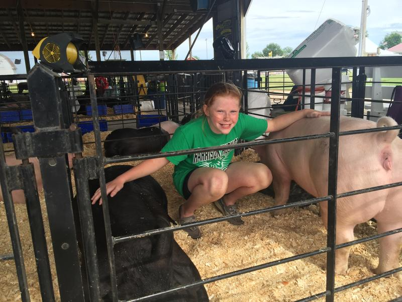 Olivia Tennant, 9, of Donnellson taking care of her pigs, Suess and Hamlet