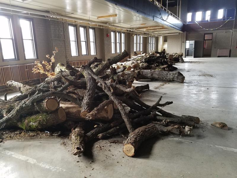 Scrap branches from the 200 year old Burr Oak tree are stacked in piles at the Armory.  The branches will be sold for $1/foot.