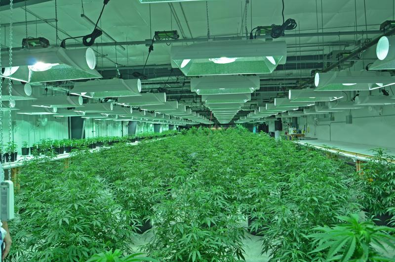 Plants line the floor in the vegetative room at Nature's Grace and Wellness, a medical marijuana cultivation facility near Vermont, Illinois.