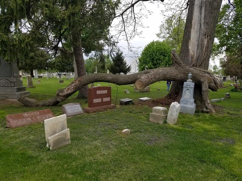 A large fallen tree branch sits above several monuments in Hope Cemetery.  Heather Dickson says it was a lucky break the branch didn't break any grave markers.