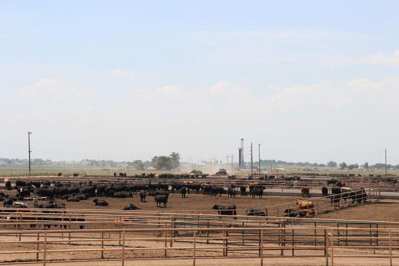 JBS USA is selling its cattle feeding operations in the U.S., which have a capacity of nearly 1 million head of cattle.