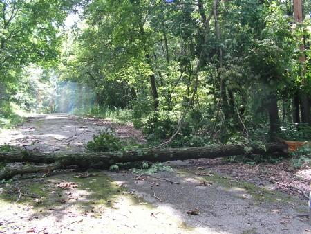 Storm damage at Argyle Lake State Park in McDonough County