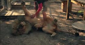 Catty Shack Ranch Executive Director Curt LoGiudice scratches a lion.