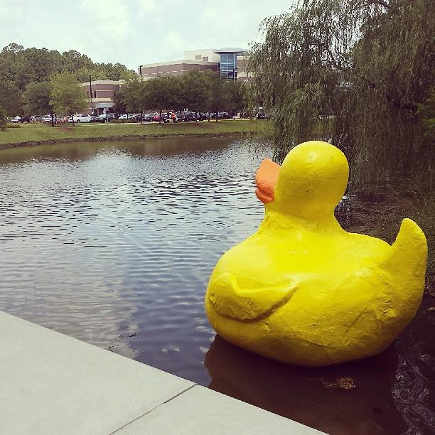 Sgt. Quackers on campus at the University of North Florida.