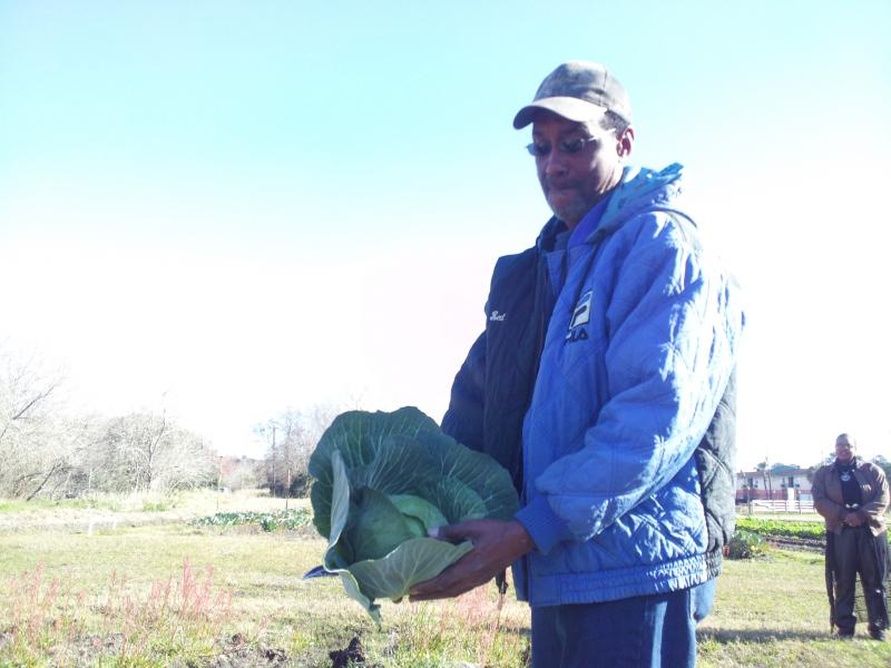 Farmer Eugene Monts shows off cabbage grown at White Harvest.