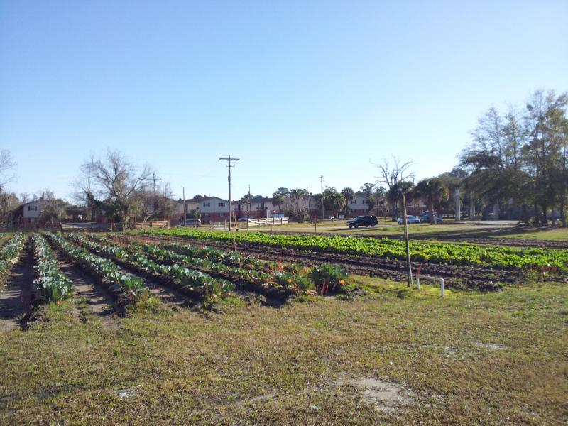 The farm sits on a 11 1/2 acre site on Moncrief Rd.