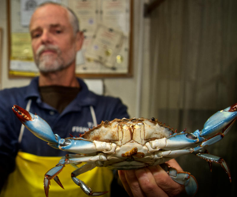 Blue crabs caught in the St. Johns River are popular at Ben Williams's seafood market, Fisherman's Dock.