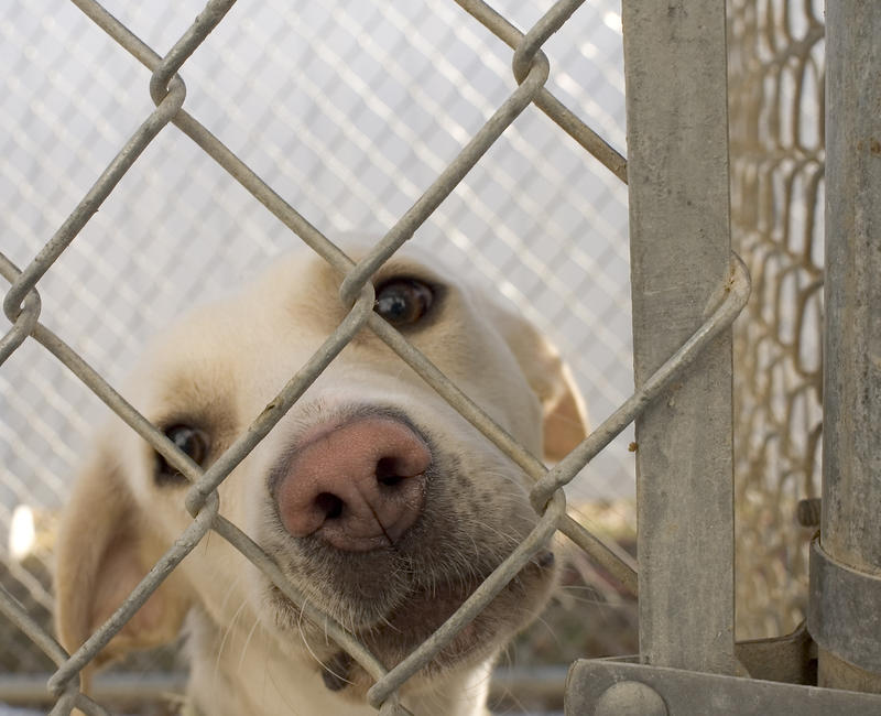 Photo of a dog behind a chain-link fence at the Paws and More No Kill Animal Shelter in Washington, Iowa.