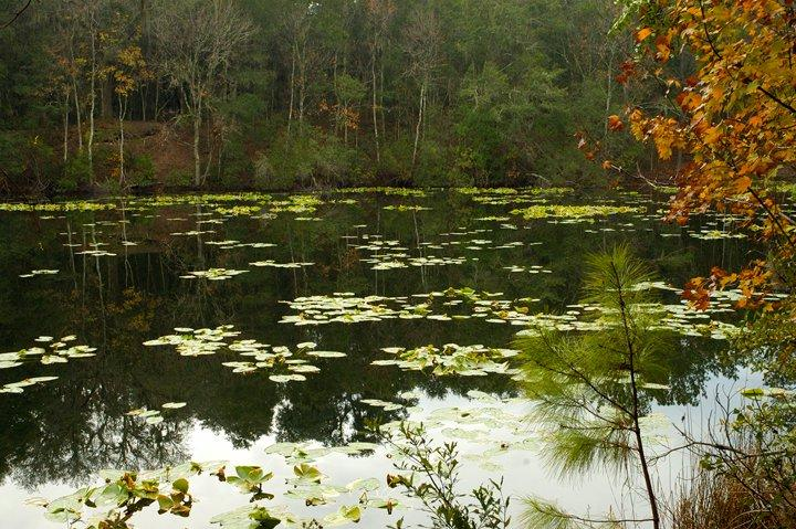 Lake Ray is a central attraction of the Jacksonville Arboretum and Gardens