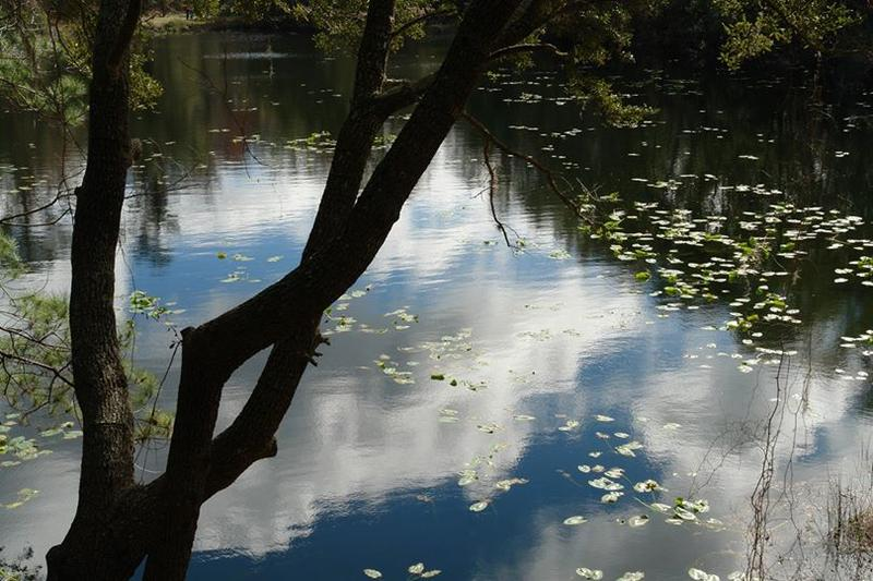 The Jacksonville Arboretum and Gardens offers many beautiful views of Lake Ray.