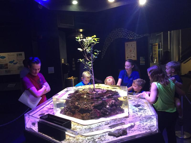 "MOSH educators Ethan Southworth and Heather Reynolds take kids on a tour of the ""touch tank."""
