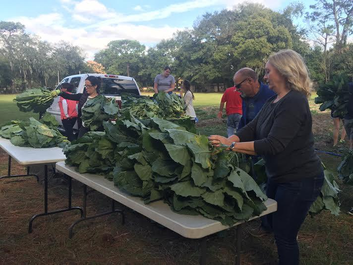 Volunteers tie rubberbands around bunches of collard greens to be delivered to the homeless.
