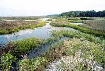 A portion of the 2,551 acres of marshalnd around the Nassau River that the North Florida Land Trust is buying is being turned over to the National Park Service for the Timicuan Ecological and Historic Preserve.