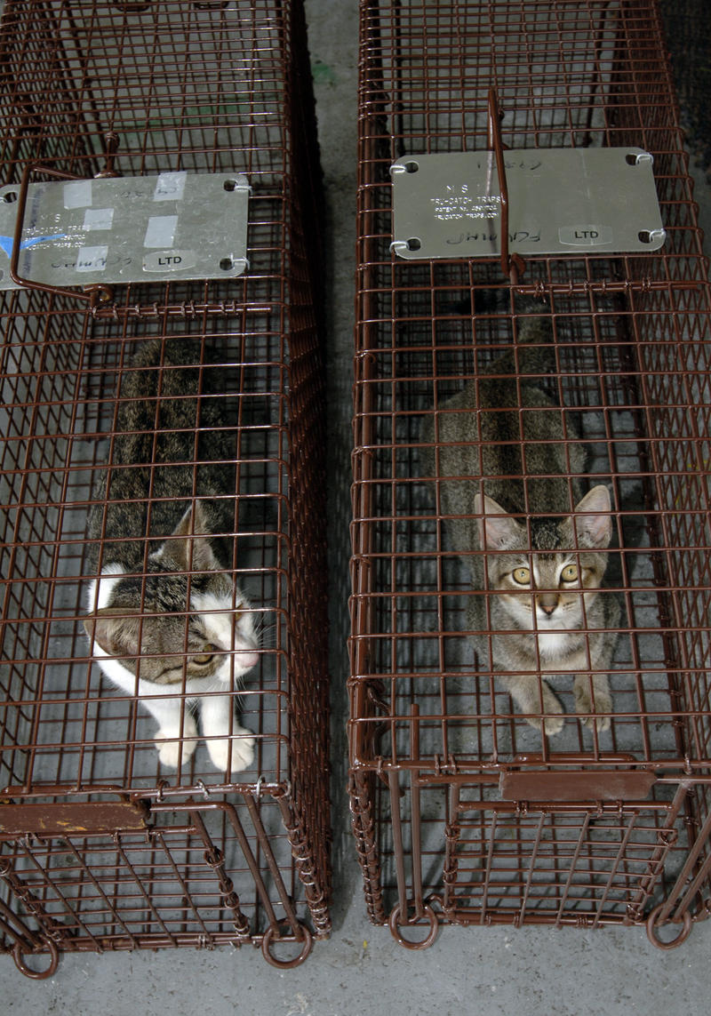 cats in cages