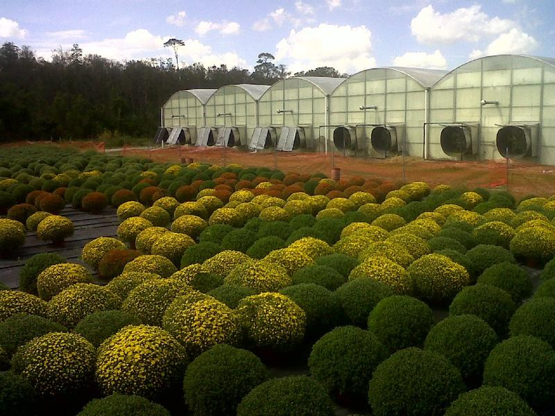 greenhouses and plants