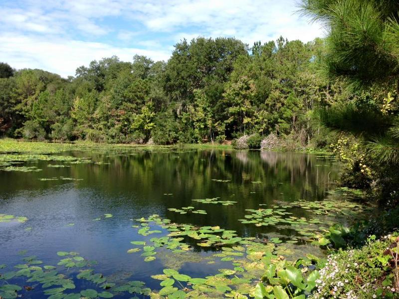 water and trees at Jax Arboretum
