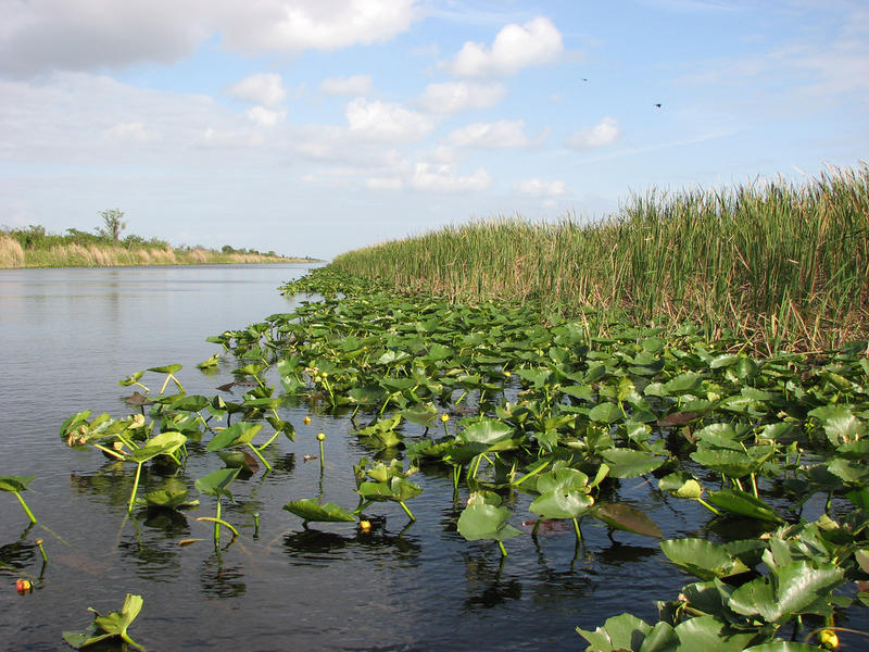 Florida Everglades plants and water