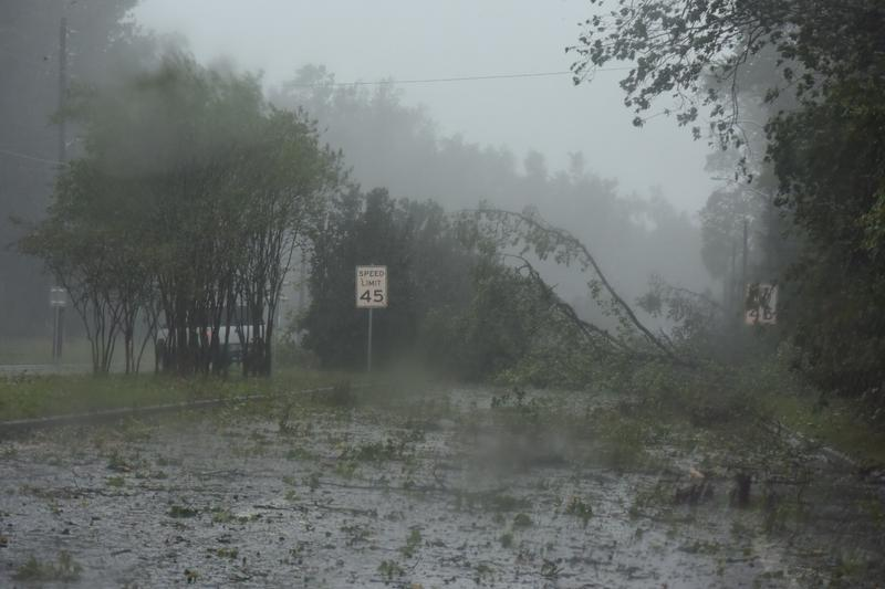 trees down in Jacksonville during Hurricane Matthew