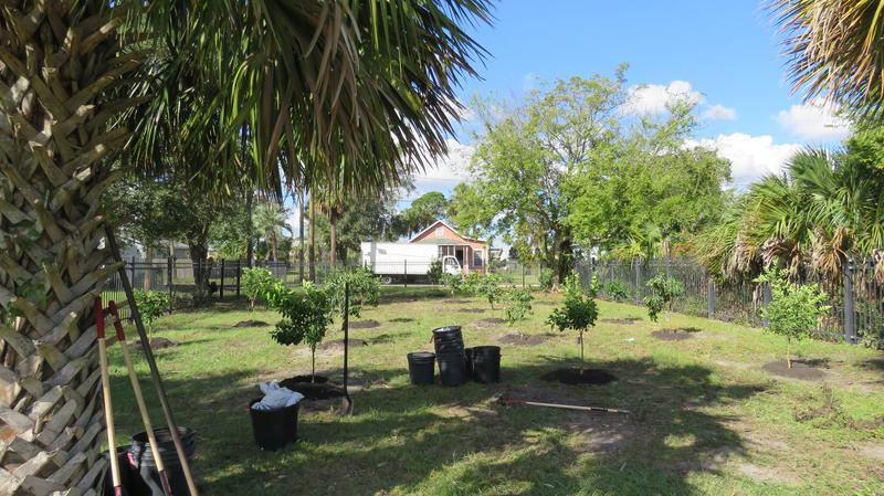 The citrus grove planted at A. Philip Randolph Heritage Park