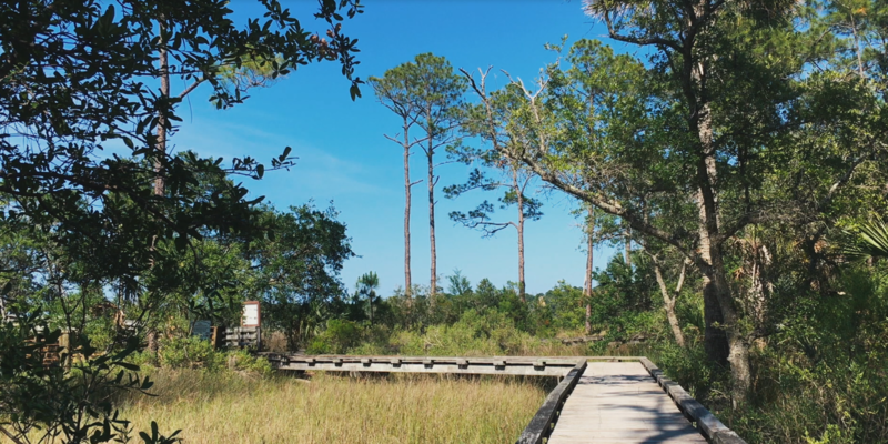 The trails at Dutton Island snake through the pine flatwoods and live oak hammocks, leading to the marsh.