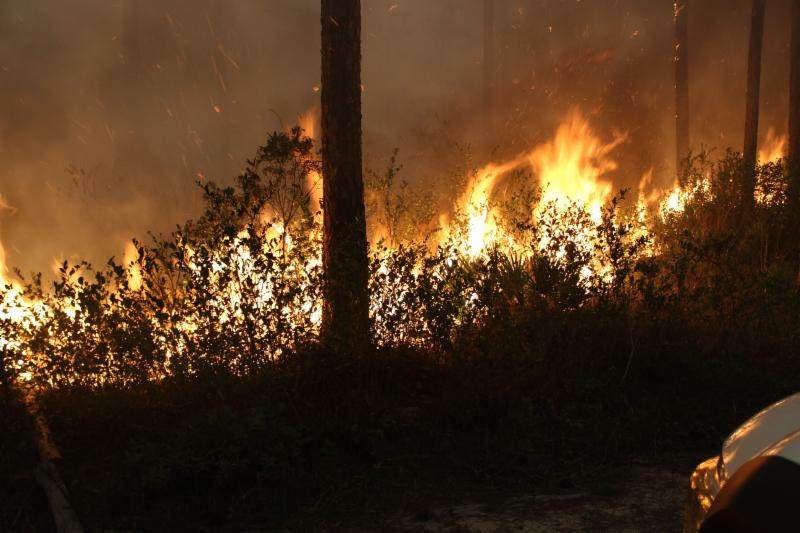 Up In Flames More Than A Dozen Wildfires Burning In Ne Florida