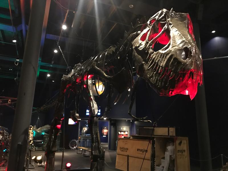 The tyrannosaurus rex at the exhibit can be touched and moved by visitors.
