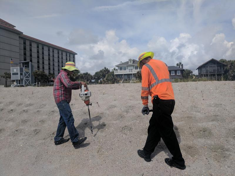 Workers replant sea oats at Atlantic Beach Wednesday.