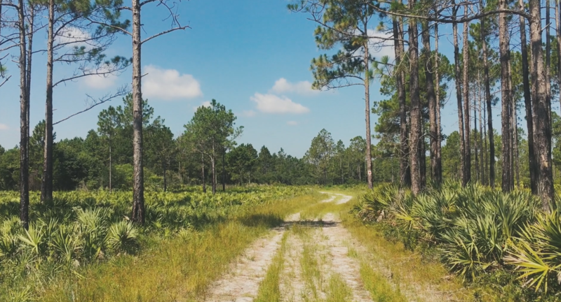 Pumpkin Hill Creek Preserve protects one of the largest continuous upland areas that remain in Duval County.
