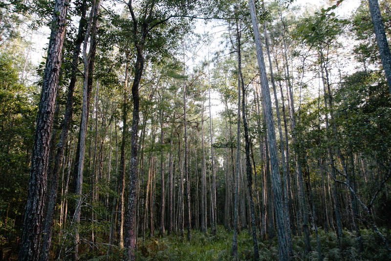 Bogey Creek Preserve
