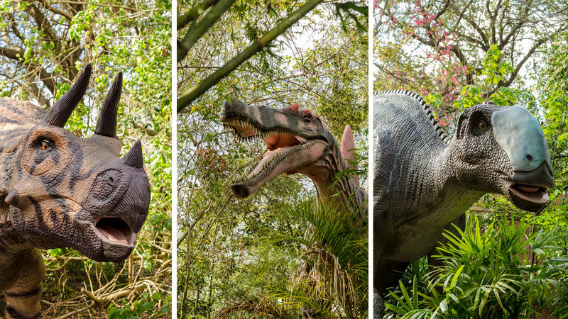 A Triceratops, Spinosaurus and Hadrosaur are pictured from the Dinosauria exhibit which opens at the Jacksonville Zoo and Gardens on March 2.