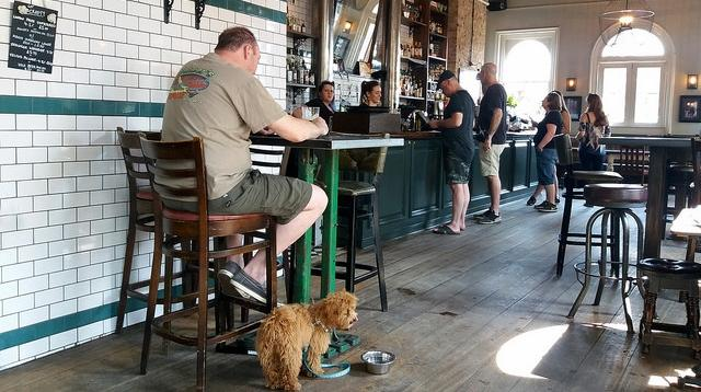dog in bar