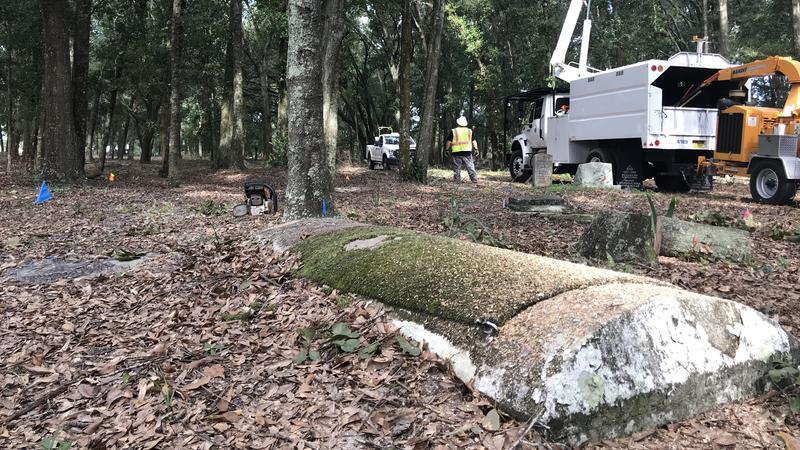 Public Works clearing trees and brush at Pinehurst Cemetery