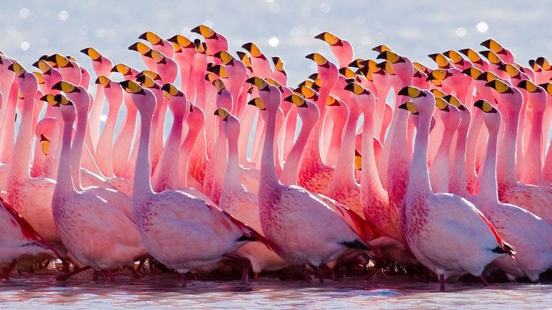 """Jacksonville's """"Project Flamingo"""" is named after the brightly colored birds."""