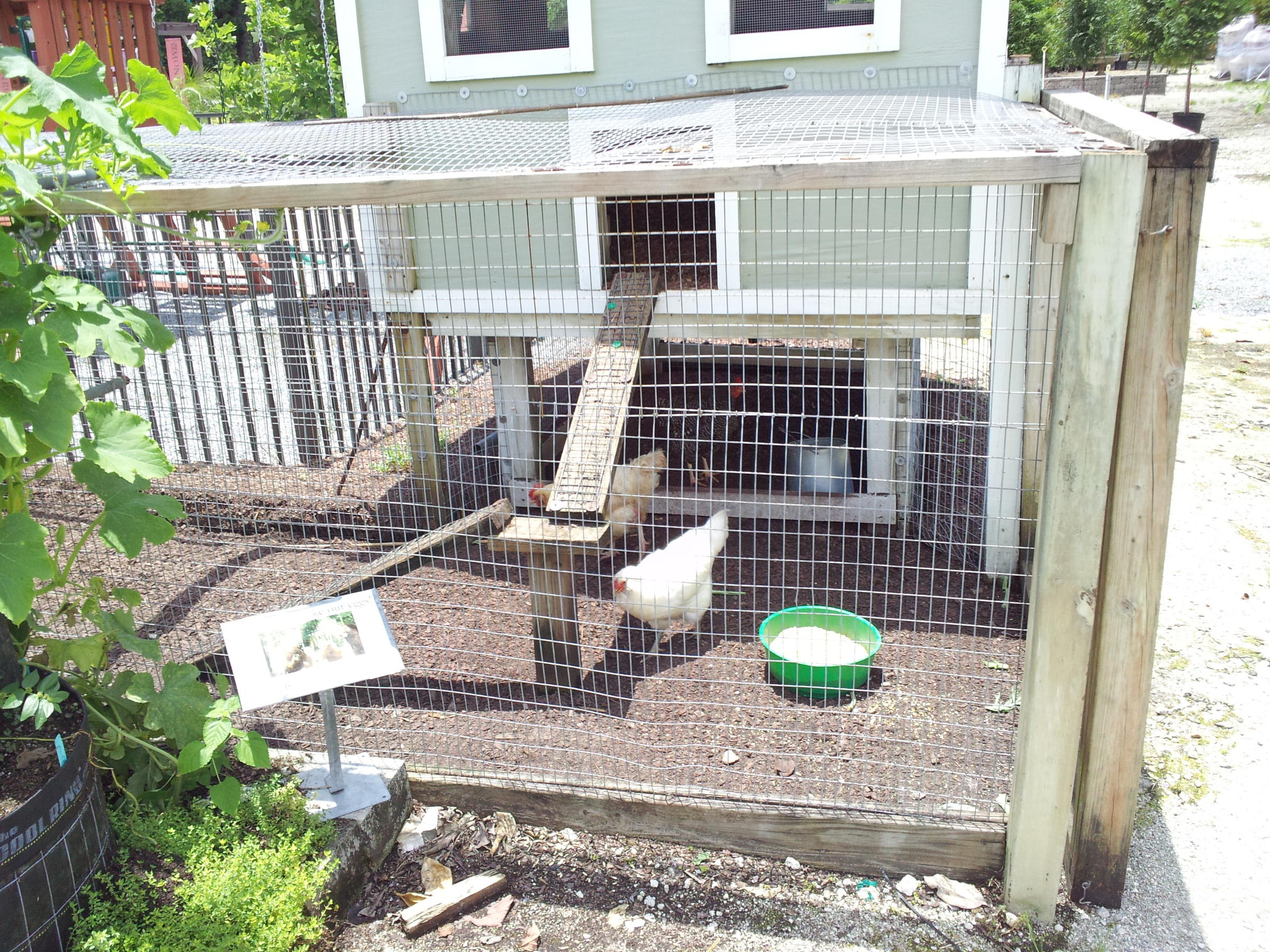 bill to allow backyard chicken coops heading to jacksonville city